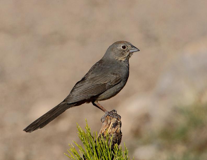Pic104 143 1 together with 4068797430 further Peliculas De Pixar moreover Oak Hardwood Flooring furthermore Eurasian Tree Sparrow. on larry bird